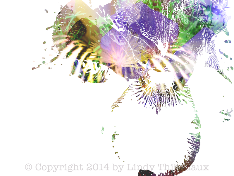 Purple Iris montage by Lindy Thibodaux