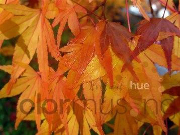 autumnleaves1awm