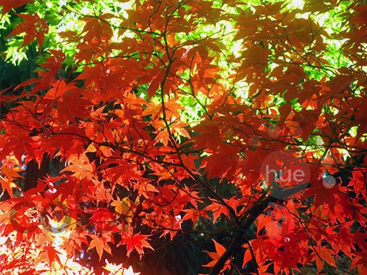 autumnleaves1bwm